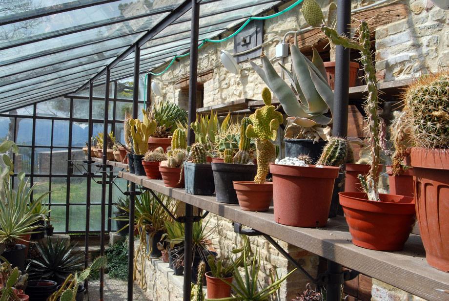 Serra piante idee per il design della casa for Serra piante grasse